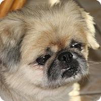 Adopt A Pet :: *Macho - Mobile, AL