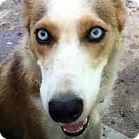 Adopt A Pet :: LaLa - Memphis, TN