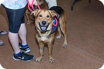 German Shepherd Dog Mix Dog for adoption in Key Largo, Florida - Tank
