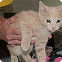 Adopt A Pet :: Ari - Durham, NC