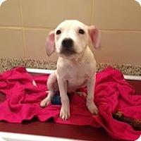 Adopt A Pet :: Cassia - Aiken, SC