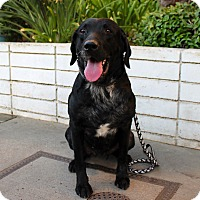 Adopt A Pet :: Bubba - Los Angeles, CA