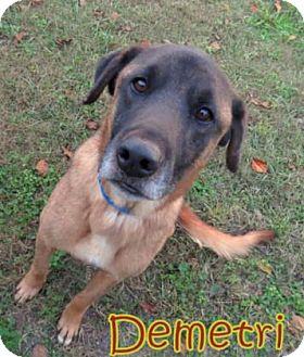 Belgian Malinois/Shepherd (Unknown Type) Mix Dog for adoption in Georgetown, South Carolina - Demetri