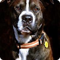 Adopt A Pet :: Micah - Fort Smith, AR