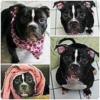 Adopt A Pet :: Elizabeth - Forked River, NJ