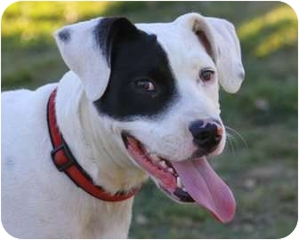 Terrier (Unknown Type, Medium)/Hound (Unknown Type) Mix Dog for adoption in Fresno, California - CASTLE