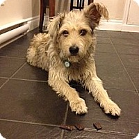 Adopt A Pet :: Romeo - Adoption Pending - Vancouver, BC