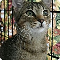 Adopt A Pet :: Janice - Walkersville, MD