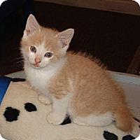 Adopt A Pet :: Mars - N. Billerica, MA