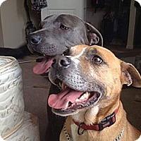 Adopt A Pet :: Cane - Nashville, TN