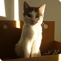 Adopt A Pet :: Abba - Hamburg, NY