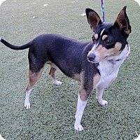 Adopt A Pet :: Josephine - Meridian, ID