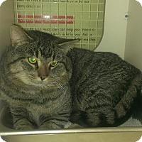 Adopt A Pet :: O'Malley - Stafford, VA