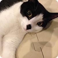 Adopt A Pet :: Frankie - Flushing, NY