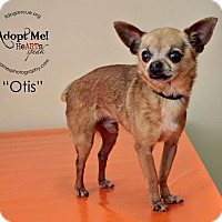 Adopt A Pet :: Otis - Shawnee Mission, KS