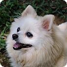 Adopt A Pet :: Sandy B Tidwell