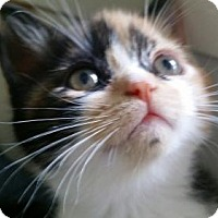 Adopt A Pet :: Zamboni - Miami, FL