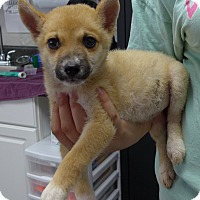 Adopt A Pet :: Foxy - Manning, SC