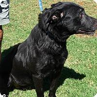 Adopt A Pet :: TASHA - SIMI VALLEY, CA