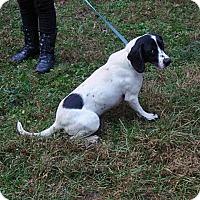 Adopt A Pet :: Blueberry - Dumfries, VA