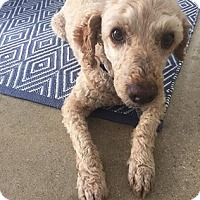 Adopt A Pet :: Ruben *Courtesy Listing - Los Angeles, CA