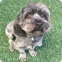 Adopt A Pet :: Reuben - Redondo Beach, CA