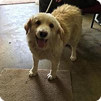 Adopt A Pet :: QUIN - Cadiz, OH