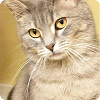 Adopt A Pet :: Sunny-BEAUTY & PURR-SONALITY+ - Naperville, IL