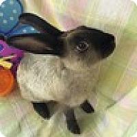 Adopt A Pet :: Grace - Paramount, CA
