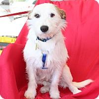 Adopt A Pet :: Fido - Umatilla, FL