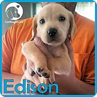 Adopt A Pet :: Edison - Chicago, IL