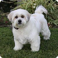Adopt A Pet :: MADILYN - Newport Beach, CA
