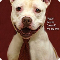 American Bulldog Mix Dog for adoption in Newnan City, Georgia - Radar