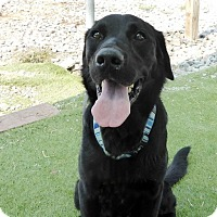 Adopt A Pet :: Bowman - Falls Church, VA