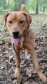 Labrador Retriever Mix Dog for adoption in Capon Bridge, West Virginia - Peter