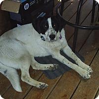 Adopt A Pet :: Sadie - cedar grove, IN