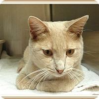 Adopt A Pet :: ARMANI - Marietta, GA