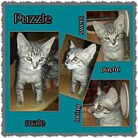 Adopt A Pet :: Puzzle - Richmond, CA