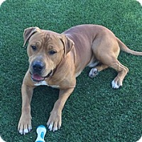 Adopt A Pet :: Trevor - Orange, CA