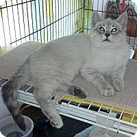 Adopt A Pet :: Armani - Dallas, TX