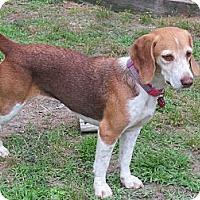 Adopt A Pet :: Hazel - Prairieville, LA