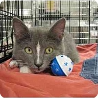 Adopt A Pet :: Simon - The Colony, TX