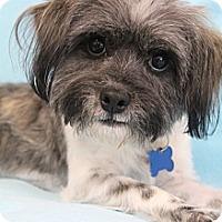 Adopt A Pet :: Zeke - Wytheville, VA