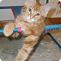 Adopt A Pet :: Tully - Byron Center, MI