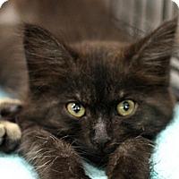 Adopt A Pet :: Beanz - Sacramento, CA