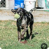 Adopt A Pet :: Paisley - El Campo, TX