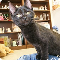 Adopt A Pet :: Savanna - Bensalem, PA