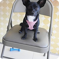 Adopt A Pet :: Emily - West LA, CA