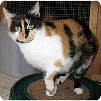 Calico Cat for adoption in Cincinnati, Ohio - Becky