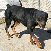 Adopt A Pet :: Nero - San Tan Valley, AZ